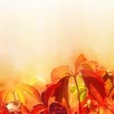 Blätter auf weichem Farbenhintergrund Lizenzfreie Stockfotos