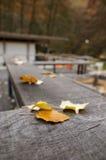Blätter auf Zaun Stockfotografie