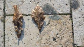 Blätter auf Ziegelstein Stockfoto