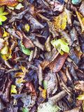 Blätter aus den Grund im Herbst Lizenzfreies Stockfoto