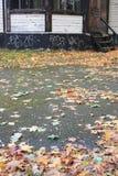 Blätter aus den Grund im Park Lizenzfreies Stockbild