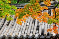 Blätter in Automn mit asiatischem traditionellem Dach lizenzfreie stockfotografie