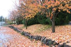 Blätter in Autum stockbilder