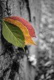 3 Blätter 1 Baum Stockbild