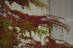 Blätter bedecken eine Steinwand Lizenzfreie Stockfotografie