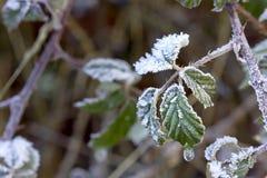Blätter bedeckt in den Eiskristallen Stockbild