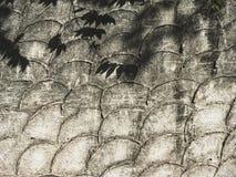 Blätter beschatten auf Halbmond troweled konkretem Musterhintergrund Lizenzfreie Stockfotografie