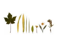 Blätter, Blumen und Kräuter des Herbstes. Lizenzfreies Stockbild