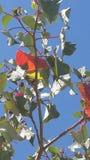 Blätter der Änderung aus heiterem Himmel Stockfoto