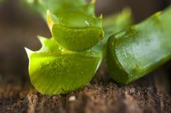 Blätter der Aloe Vera Lizenzfreies Stockbild