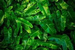 Blätter der Bäume Stockfotografie