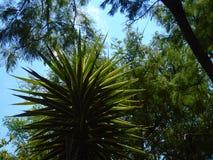 Blätter der Bäume und des Himmels stockfotos