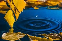 Blätter der Birke über dem Wasser mit Kräuselungen von den Regentropfen Stockbild