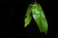 Blätter in der Dunkelheit stockfotos