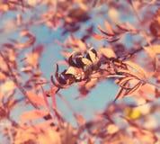 Blätter der Eberesche Stockfotografie