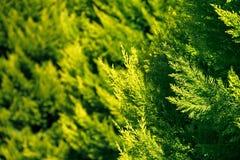 Blätter in der grünen Farbe Stockbild