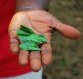 Blätter in der Hand Lizenzfreie Stockfotos