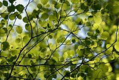 Blätter in der Hintergrundbeleuchtung Stockfotos