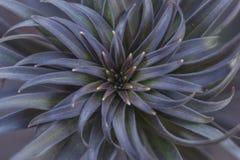 Blätter der Lilie in Form eines Sternes Stockbild