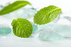 Blätter der Minze im Eis Stockbilder
