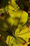 Blätter in der Nachmittagssonne Lizenzfreies Stockfoto