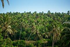 Blätter der Palme Stockbild