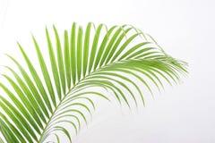 Blätter der Palme lizenzfreie stockfotografie