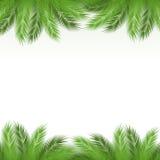 Blätter der Palme stock abbildung
