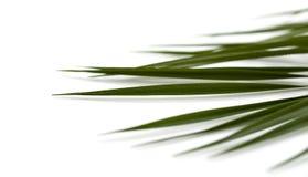 Blätter der Palme Lizenzfreies Stockbild