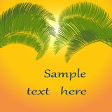 Blätter der Palme auf orange Hintergrund Abbildung Stockbild