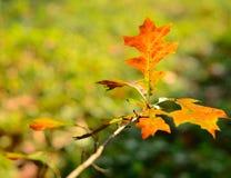 Blätter der roten Farben Stockfotos