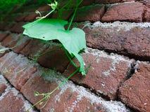 Blätter in der Wand lizenzfreie stockfotos