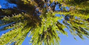 Blätter der Weide Stockbilder