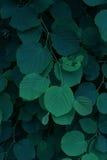 Blätter in der zurückhaltenden Art Lizenzfreie Stockfotos