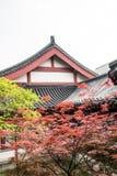 Blätter des Ahorns (Acer-palmatum Thunb) Lizenzfreie Stockfotos