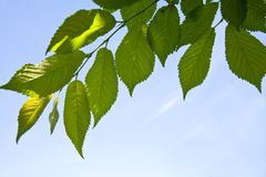 Blätter des Baums lizenzfreies stockbild