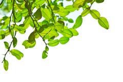 Blätter des Baums Lizenzfreie Stockfotografie