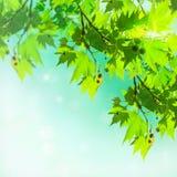Blätter des flachen Baums auf einem abstrakten Hintergrund Stockbilder