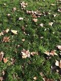 Blätter des grünen Grases und des Brauns stockfotografie