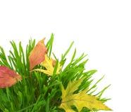Blätter des grünen Grases und des Falles, getrennt auf Weiß Stockbilder