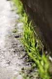 Blätter des Grases im Stein Lizenzfreie Stockfotografie