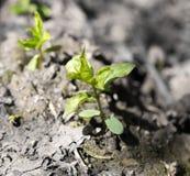 Blätter des Grases im Stein Stockfoto