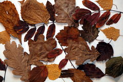 Blätter des Herbstes stockfoto