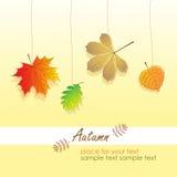 Blätter des Herbstes, vektorabbildung Stockfotos