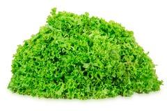 Blätter des Kopfsalates Stockfotografie