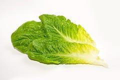 Blätter des Römersalats auf weißem Hintergrund Stockbilder