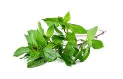 Blätter des süßen Basilikums mit Stamm auf Weiß Lizenzfreies Stockbild