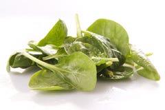 Blätter des Spinats Stockfoto