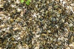 Blätter, die auf den Boden im Holz legen Stockbild