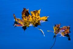 Blätter, die auf einen Teich im Fall schwimmen Lizenzfreies Stockfoto